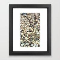 Scattered Shells Framed Art Print