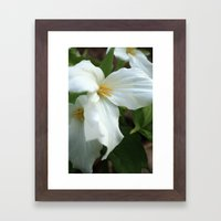 Fleeting Beauties Framed Art Print