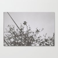Small Blooms Canvas Print