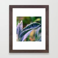 fly on Stachys leaf Photography - Nature - Garden - Plant  Framed Art Print