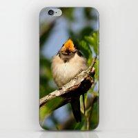 Singing swallow iPhone & iPod Skin