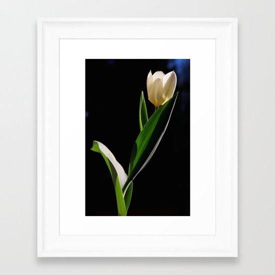 Tulipano Framed Art Print