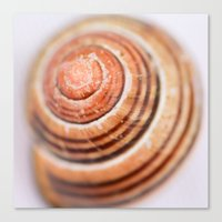 Snail Shell Canvas Print