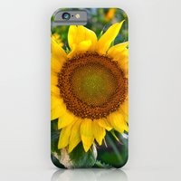 Sunflower Fields Forever - No. 1 iPhone 6 Slim Case