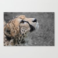 Cheetah 1 Canvas Print