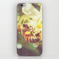 Honey Bee: Pearl iPhone & iPod Skin