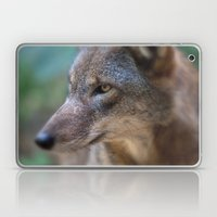 Red Wolf Stares Laptop & iPad Skin