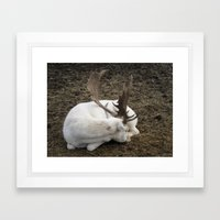 White Fallow Deer Framed Art Print