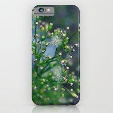 Mini Dandelions iPhone 6s Slim Case