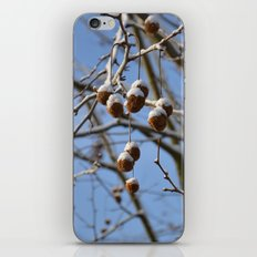Winter II iPhone & iPod Skin