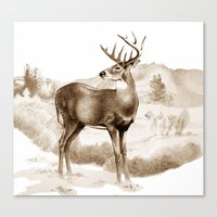 White-tailed Stag Sniffi… Canvas Print