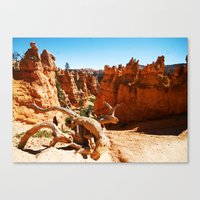 Bryce Canyon National Park. Utah, USA Canvas Print