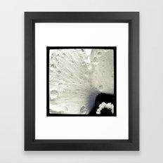 FLOWER 019 Framed Art Print