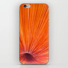 Orange and Red iPhone & iPod Skin