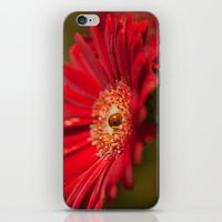 The Gerbera And The Lady… iPhone & iPod Skin