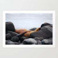 Galapagos Sea Lion Art Print