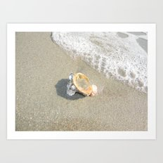 Washed Up Seashell. Art Print