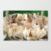 Bunnies In A Basket Canvas Print