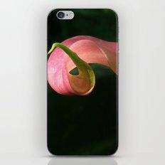 Curve in Pink iPhone & iPod Skin