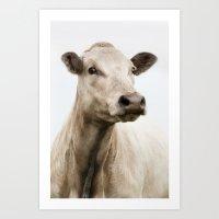 silvercow Art Print