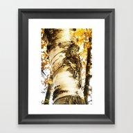 The Beautiful Birch Framed Art Print