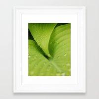 Dew Drops Framed Art Print
