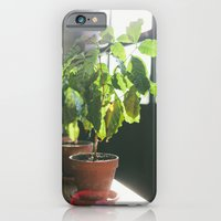 Potted Plant iPhone 6 Slim Case