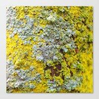 Moss! Canvas Print
