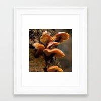 Mushrooms II Framed Art Print
