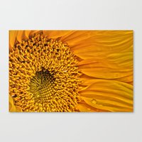 Sunflower 5 Canvas Print