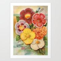 Vintage Floral Begonias Art Print