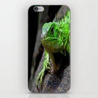 The Lizard King Of Aruba iPhone & iPod Skin