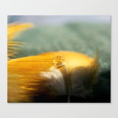 Yellow Feather Drop Canvas Print