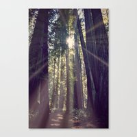 Redwoods Hike Canvas Print