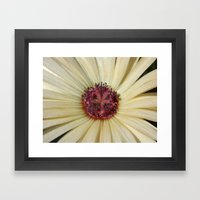 livingstone daisy Framed Art Print
