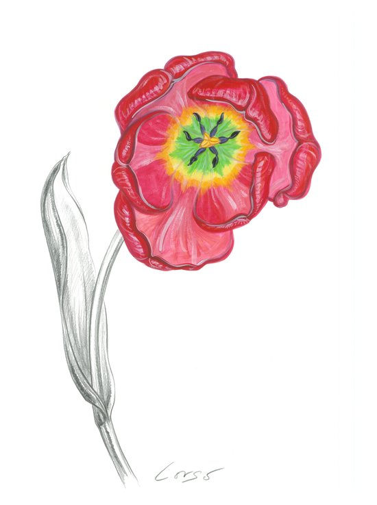 Tulip 01 Botanical Flower Art Print