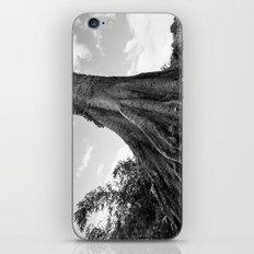 nature age iPhone & iPod Skin