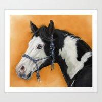 American Paint Horse -  portrait Art Print