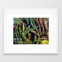 Sweet Green Algae Framed Art Print