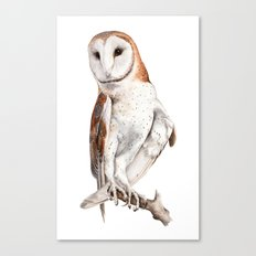 Barn Owl Watercolor Canvas Print