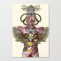 Chakras Anatomical Colla… Canvas Print