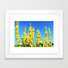 blue summer sky and yellow flowers Framed Art Print