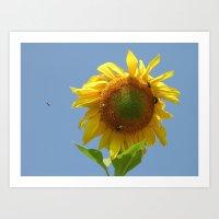 Bees on a sunflower Art Print
