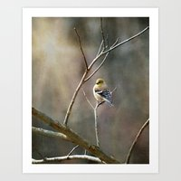 Morning Goldfinch Art Print