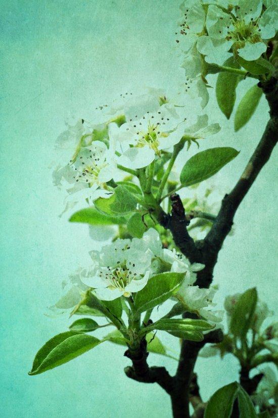 under the pear tree Art Print