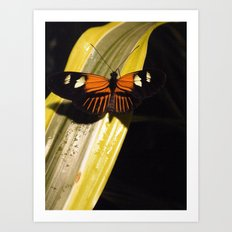 Butterfly on Leaf Art Print