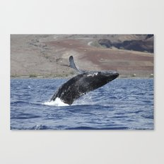 Humpback Calf Breaching Canvas Print