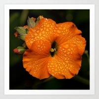 Apricot Delight. Art Print