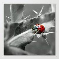 ladybug I Canvas Print