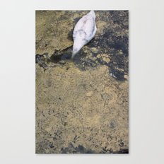 SWAN DIVING Canvas Print